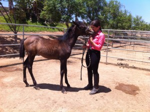 With Aria de Los Cielos as a foal.
