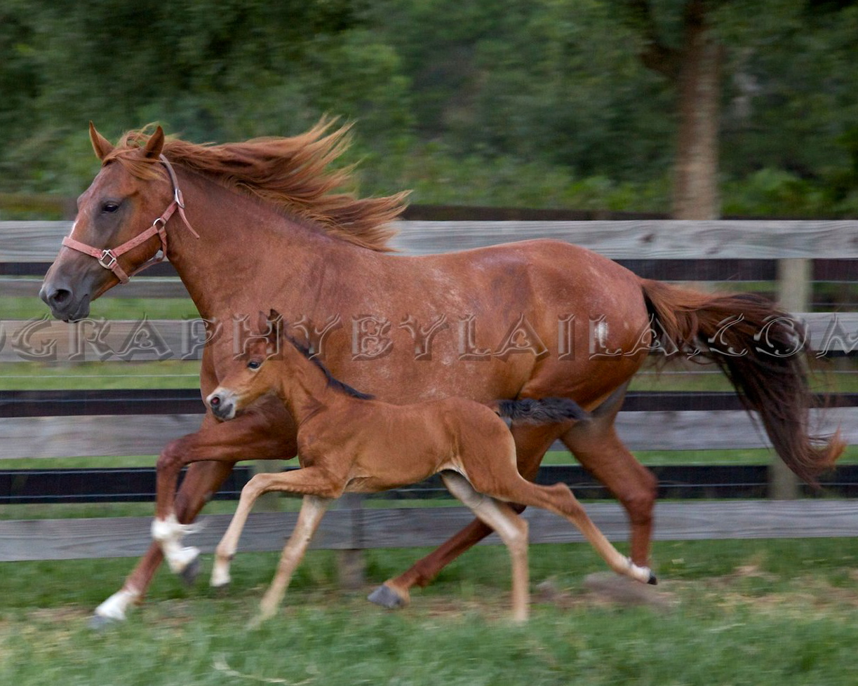MM mare and foal