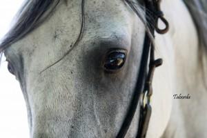 Eye of the Marchador